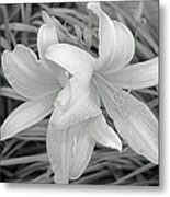 Black And White Lilies Metal Print