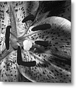 Black And White Lily Up Close Metal Print