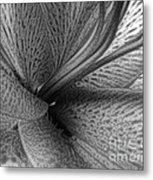 Black And White Lily Z Map L Metal Print
