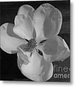 Black And White Magnolia Blossom Metal Print