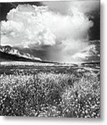 Black And White Meadow Metal Print