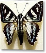 Black And White Moth Metal Print