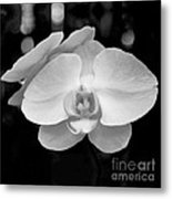 Black And White Orchid With Lights - Square Metal Print