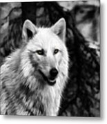 Black And White Painted Wolf Metal Print