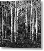 Black And White Photograph Of Birch Trees No. 0126 Metal Print