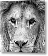Black And White Portrait Of A Lion Metal Print