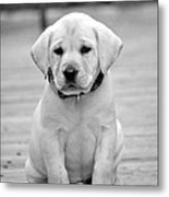 Black And White Puppy Metal Print