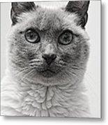 Black And White Siamese Cat Metal Print