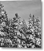 Black And White Snow Covered Trees Metal Print