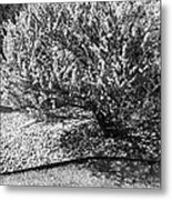 Black And White Spring Metal Print