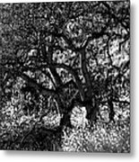 Black And White Trees Metal Print