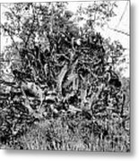 Black And White Uprooted Tree Metal Print