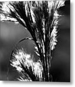 Black And White Vegetation In The Dunes Metal Print