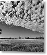 Black And White Wheat Field Metal Print