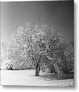 Black And White Winter Metal Print by Thomas Fouch