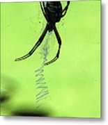 Black And Yellow Argiope - Spider Silhouette 02 Metal Print
