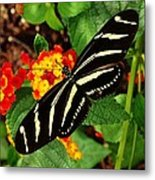 Black And Yellow Butterfly Metal Print