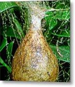 Black And Yellow Garden Spider Egg Sac Metal Print
