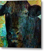 Black Angus Metal Print