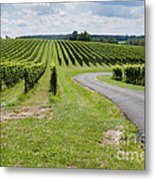Maryland Vinyard In August Metal Print