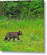 Black Bear Along Yellowhead Highway-bc Metal Print