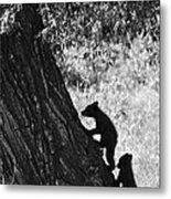 Black Bear Cubs Climbing A Tree Metal Print