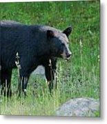 Black Bear Female Metal Print