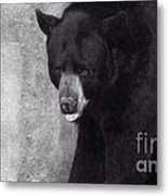 Black Bear Pose Metal Print