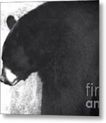 Black Bear Profile Metal Print