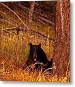 Black Bear Sticking Out Her Tongue  Metal Print