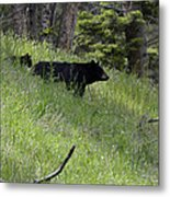 Black Bear With Cub Symetrical On Hillside Metal Print