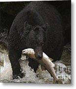 Black Bear With Salmon Metal Print