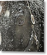 Black Beauty In A Blizzard Metal Print