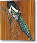 Black Billed Magpie Metal Print