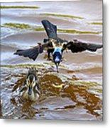 Black Bird On The Water Metal Print