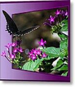 Black Butterfly 07 Metal Print