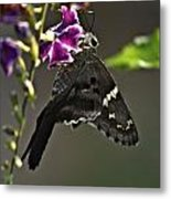Black Butterfly Metal Print by Elery Oxford