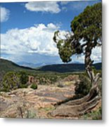 Black Canyon Juniper Metal Print