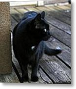 Black Cat On Porch Metal Print