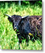 Black Cow Metal Print