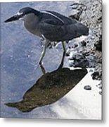 Black Crowned Night Heron And Shadow Metal Print