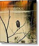 Black-crowned Night Heron Metal Print