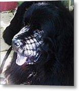 Black Dog Metal Print