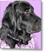 Black Dog Pretty In Lavender Metal Print