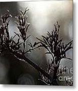 Black Edlerberry Bush Metal Print