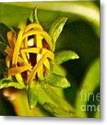 Black Eyed Susan Bud Metal Print