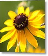 Black-eyed Susan With Friend Metal Print