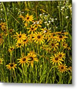 Black Eyed Susans Metal Print