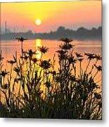 Black-eyed Susans Sunrise Metal Print
