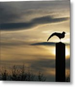 Black Headed Gull   Larus Ridibundus Metal Print